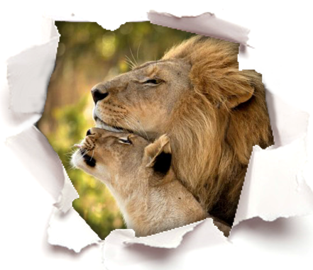 Calm the Roaring Lion Gently