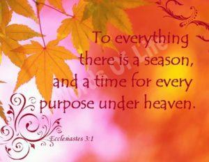 Seasons-Revelatory Concept